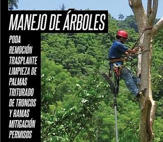 PODA DE ARBOLES