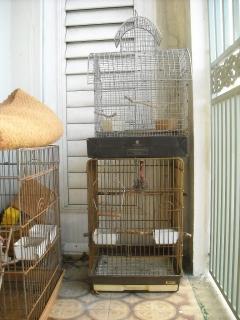 Jaulas aves - varias
