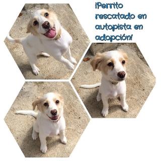 Puppy de 4-6 meses para adopción.